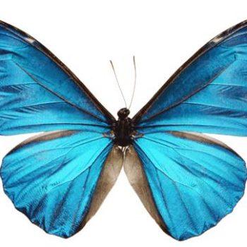 mariposas-siderales-L-5uSbAE